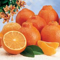 One of my favorite PEEKS: Cushman\'s Fruit Company-the HoneyBell