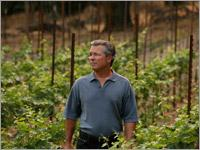 LOBO Wines of  Napa Valley Delivers Award Winning Cabernet at Reasonable Price