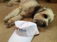 Bring Your Best Buddy To Bethany Beach at Meris Gardens B&B