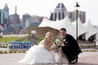 Dog Friendly Hotels for Fido and his Traveling Parents